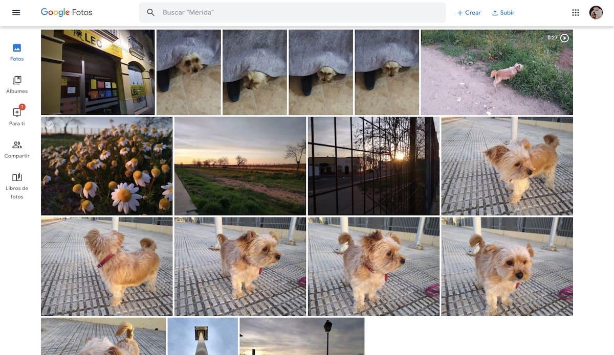 google fotos trucos 2020
